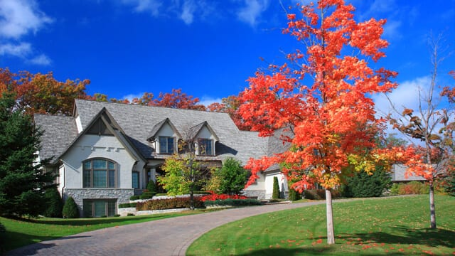 Red maple tree in the fall is ideal for landscaping ideas for your front yard in the fall.